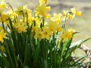 Je tuin klaarmaken voor het voorjaar