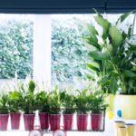 12 Planten voor gezonde lucht in huis